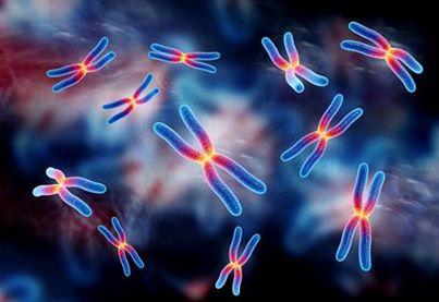 تدریس خصوصی زیست شناسی و ژنتیک و همچنین واحدهای درسی ژنتیک دانشگاهی رشته های پزشکی و ژنتیک و سایر رشته های پیراپزشکی و انجام پايان نامه و سمينار- دانشجوی دکتری  ژنتيك