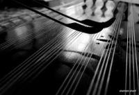 الناز اسدی - تدریس خصوصی موسیقی